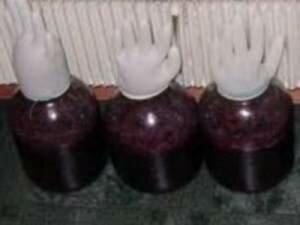 Домашнее вино из винограда (фото)